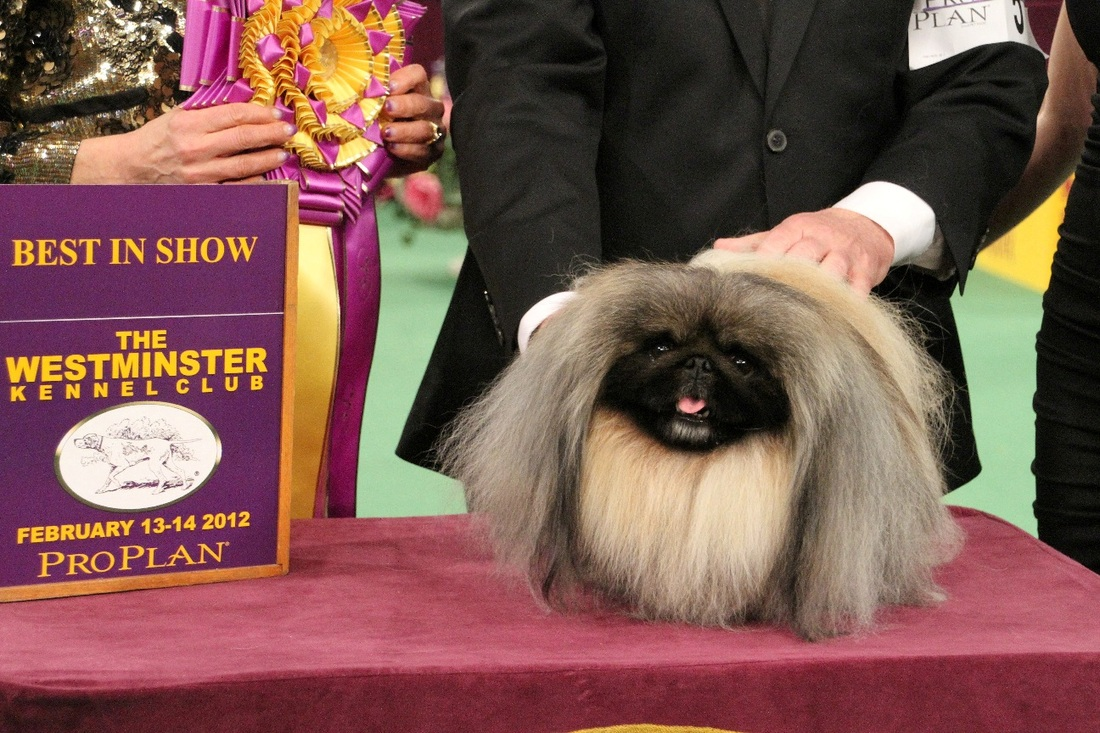 Watch Westminster Dog Show 2020.Westminster Dog Show Daily Itinerary